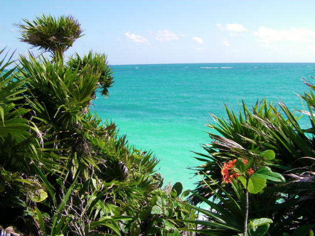 Tulum Blue Water Agua Azul Lush Vegetation Riviera Maya Mexico Vacation Beautiful Paradise