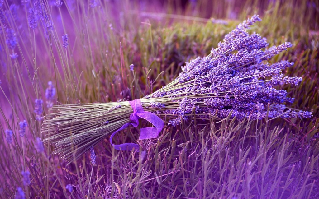 awesome-lavender-full-hd-desktop-background-wide-photos-free